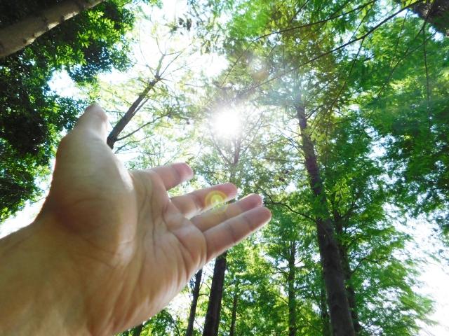 """自然のエネルギー<a href=""""https://www.photo-ac.com/profile/1736588"""">babel's artworks</a>さんによる<a href=""""https://www.photo-ac.com/"""">写真AC</a>からの写真"""